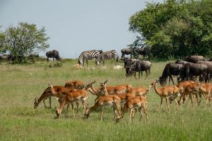 Must See Safari Wildlife: Kenya's deadliest Predators