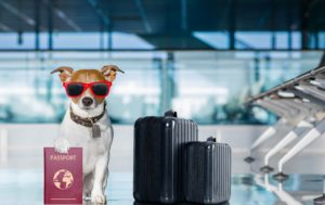 Best Ways To Travel With Your Most Loved Pet