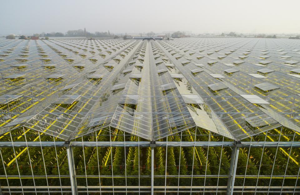 Greenhouses1.jpg